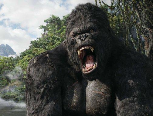 Do Not Wake Sleeping Gorilla